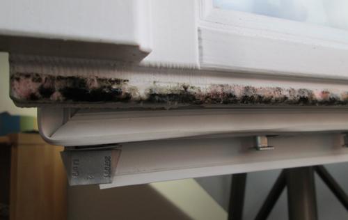Top Schimmel am Fenster - Schimmel-effektiv-entfernen LX51